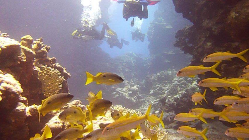 voros-tenger
